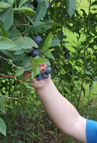 Brentlee and I picked blueberries