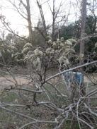 Waiting wisteria